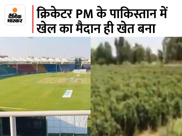 पंजाब प्रांत का खानेवाल स्टेडियम खेत में बदला, यहां उगाई जा रही हरी मिर्च और कद्दू|स्पोर्ट्स,Sports - Dainik Bhaskar