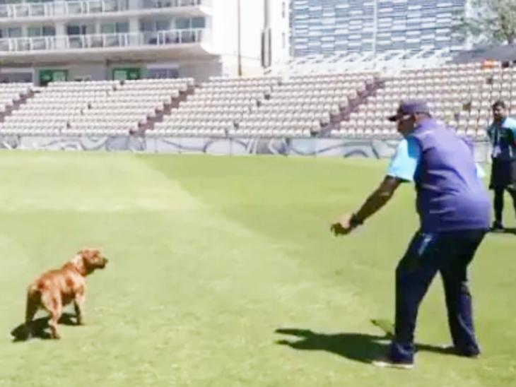 रवि शास्त्री को डॉग से काफी लगाव है। साउथैम्पटन में वर्ल्ड़ टेस्ट चैंपियनशिप से पहले वे वहां के एक कर्मचारी का डॉग विंस्टन के साथ खेलते देखे गए थे। - Dainik Bhaskar
