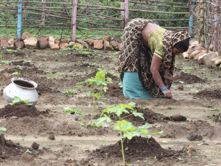 गांव की महिलाओं को आत्मनिर्भर बनाने के लिए ऑर्गेनिक फार्मिंग पर जोर दिया जा रहा है। ज्यादातर महिलाएं इससे जुड़कर खुद की आजीविका कमा रही हैं। फोटो- अरुण कुमार