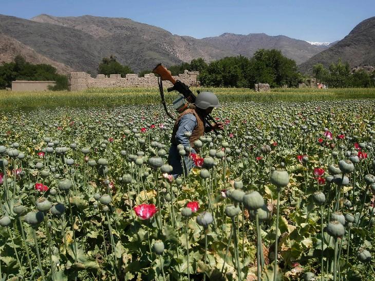 दुनिया में अच्छी इमेज बनाने के लिए अफगानिस्तान में अफीम की खेती पर लगाई रोक, पिछले साल ड्रग्स से 11 हजार करोड़ रुपए कमाए थे विदेश,International - Dainik Bhaskar