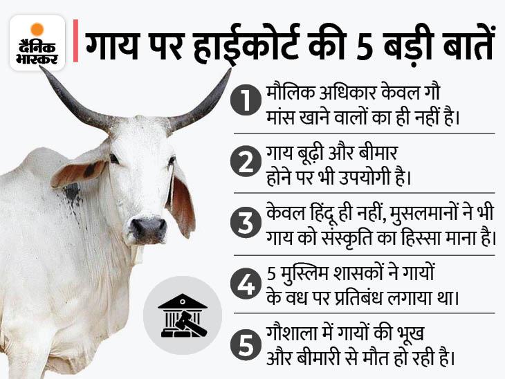 इलाहाबाद हाईकोर्ट ने कहा- गोरक्षा को किसी भी धर्म से जोड़ने की जरूरत नहीं, गायों को मौलिक अधिकार देने के लिए बिल लाए सरकार|लखनऊ,Lucknow - Dainik Bhaskar