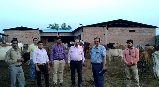 अब तक 300 गायों की हो चुकी मौत, अफसरों को सब कुछ ठीक मिला, बोले- थोड़ी दिक्कतें हैं, जल्दू दूर होंगी|एटा,Etah - Dainik Bhaskar