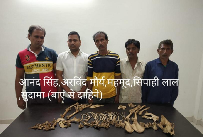 वाराणसी आए थे लकड़बग्घा की हडि्डयां बेचने, एसटीएफ और वन विभाग ने पकड़ा; वाइल्ड लाइफ क्राइम कंट्रोल ब्यूरो ने दी थी सूचना वाराणसी,Varanasi - Dainik Bhaskar