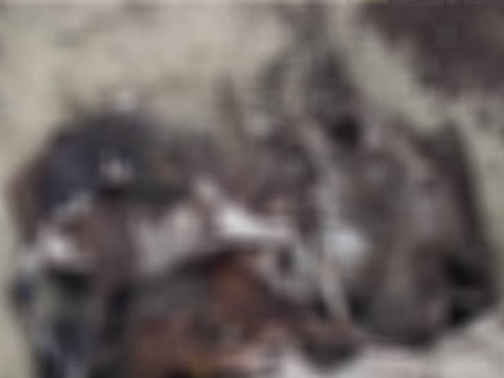 गड्ढा खोदकर गायों को गोशाला में ही दफन किया जा रहा है।
