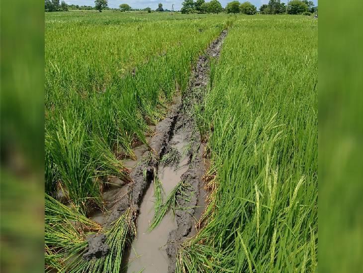 भोपाल में कई गांवों में गैस लाइन बिछाने से उजड़ी फसल, किसानों ने मांगा मुआवजा|भोपाल,Bhopal - Dainik Bhaskar
