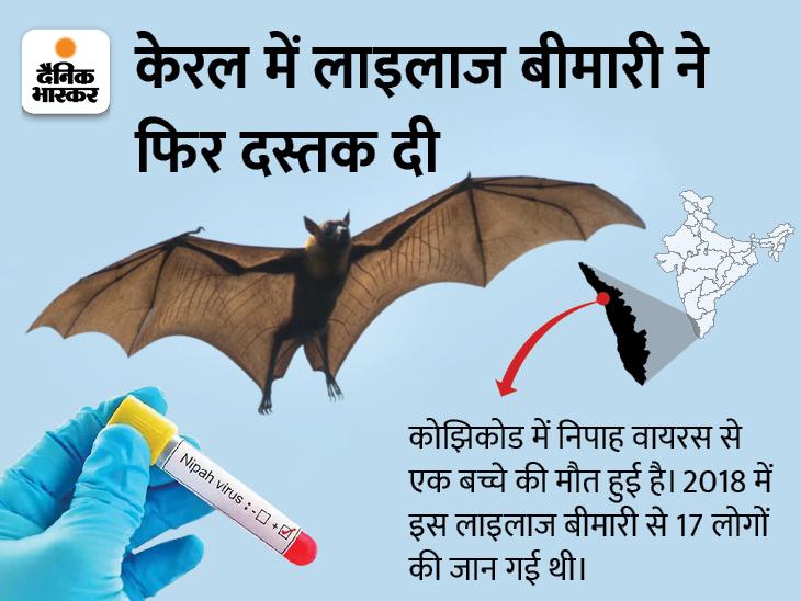 कोझिकोड में निपाह वायरस से 12 साल के बच्चे की मौत, राज्य में 2 साल बाद लौटा ये वायरस|देश,National - Dainik Bhaskar