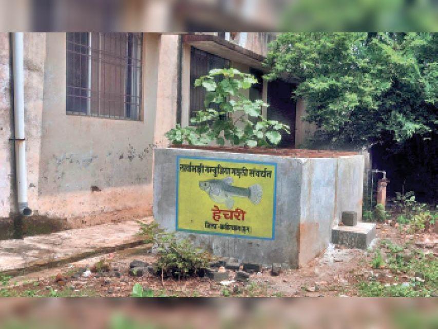 वर्तमान में सीएमएचओ कार्यालय के बाहर टंकी में गंबूजिया मछली रखी गई है। - Dainik Bhaskar