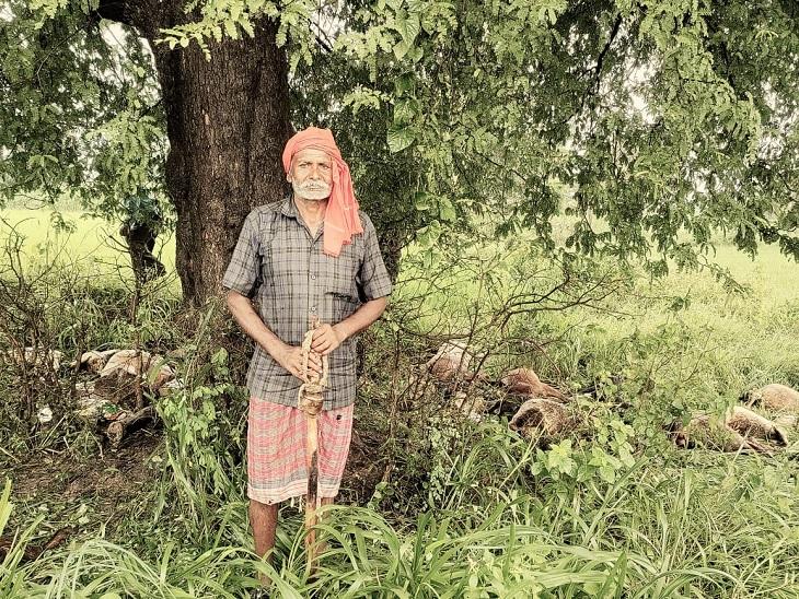 आकाशीय बिजली गिरने से 41 बकरे-बकरियों की मौत, दो चरवाहे लेकर गए थे चराने; बारिश होने पर इमली के पेड़ के नीचे खड़े थे|छत्तीसगढ़,Chhattisgarh - Dainik Bhaskar