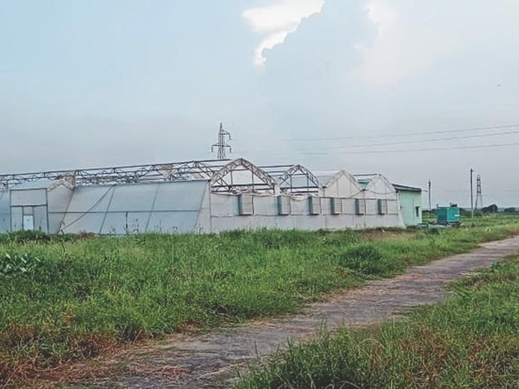 नूराबाद की नर्सरी में क्षतिग्रस्त नेटहाउस की मरम्मत नहीं कराई जा रही है। - Dainik Bhaskar
