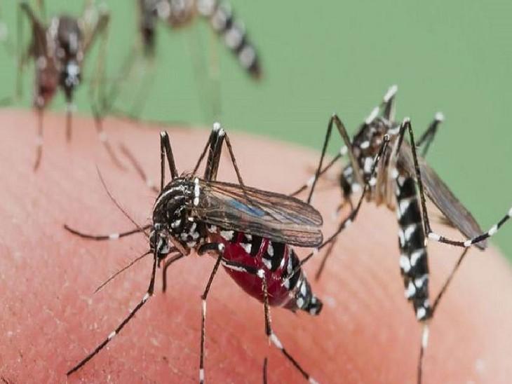 अब सभी सरकारी ऑफिस के एक कर्मचारी को दी जाएगी डेंगू लार्वा नष्ट करने की ट्रेनिंग|भोपाल,Bhopal - Dainik Bhaskar