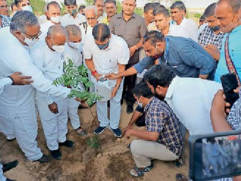 बाड़मेर. नंदी गौशाला में पौधरोपण करते मंत्री प्रमोद जैन भाया। - Dainik Bhaskar