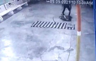 युवक पर हवा में उछलकर हमला करने की कोशिश करता सांप।