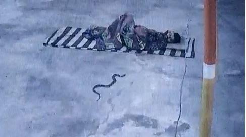 फर्श पर सो रहे युवक के बिस्तर तक पहुंचा सांप, 5 मिनट पैर में लिपटा रहा, हड़बड़ाकर खड़ा हुआ तो उछलकर सांप ने किया हमला|बांसवाड़ा,Banswara - Dainik Bhaskar