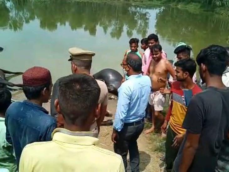 भैंसों को तालाब में नहलाने ले गया था, पानी में टूटकर गिरा HT लाइन का तार, झुलसने से तोड़ा दम|मुरादाबाद,Moradabad - Dainik Bhaskar