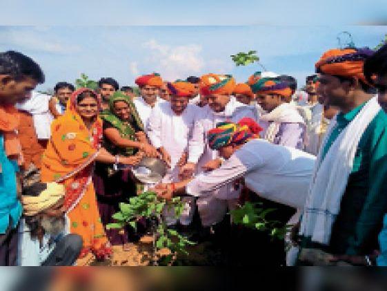 टोंक| भरनी स्थित चरागाह में सचिन पायलट के जन्मदिवस को लेकर 51 सौ पौधे लगाए गए। - Dainik Bhaskar