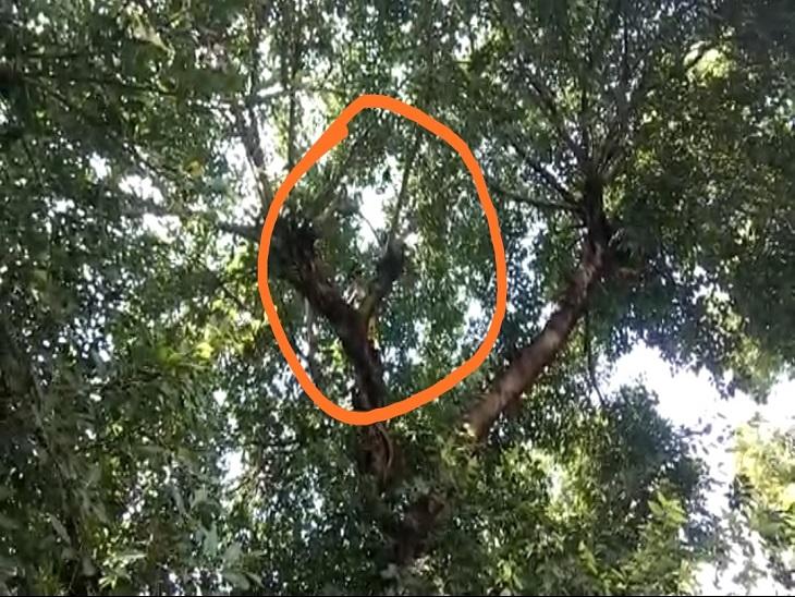 सहारनपुर के देवबंद थाने में लगे पेड़ में फंसा था कौवा, पेड़ से कौवे को नीचे उतारकर चिकित्सक बुलाकर इलाज कराया|सहारनपुर,Saharanpur - Dainik Bhaskar