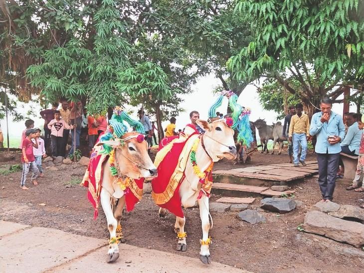 मराठा समाज : बैलों को आकर्षक रूप से सजाकर ग्राम में घूमाया