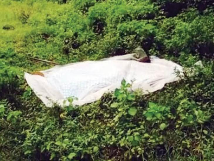 घर की बाड़ी से महिला को घसीटकर ले गया तेंदुआ, मिली आधी-अधूरी लाश कांकेर,Kanker - Dainik Bhaskar