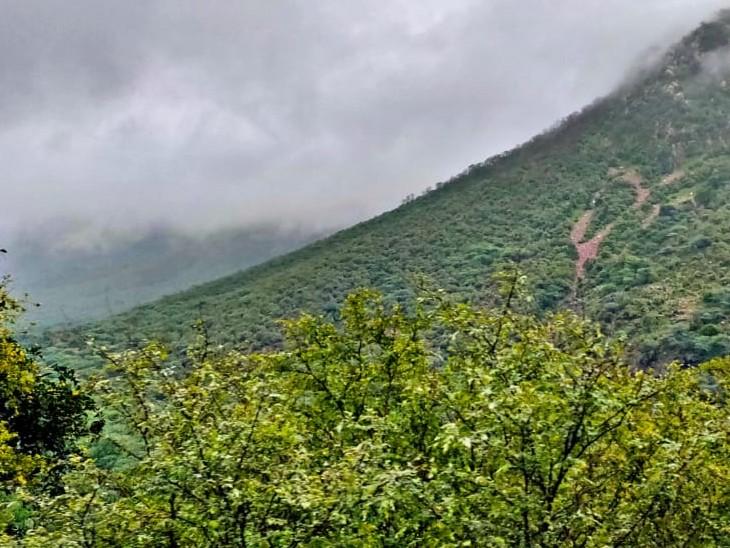 बारिश से पहाड़ों पर हरियाली खूबसूरती। - Dainik Bhaskar