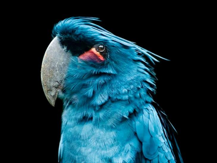 जलवायु परिवर्तन का सबसे ज्यादा बदलाव चिड़ियों में देखने को मिल रहा है। जैसे- 1871 से अब तक ऑस्ट्रेलियाई तोते की चोंच में 10 फीसदी तक बढ़ोतरी देखी गई है। - Dainik Bhaskar