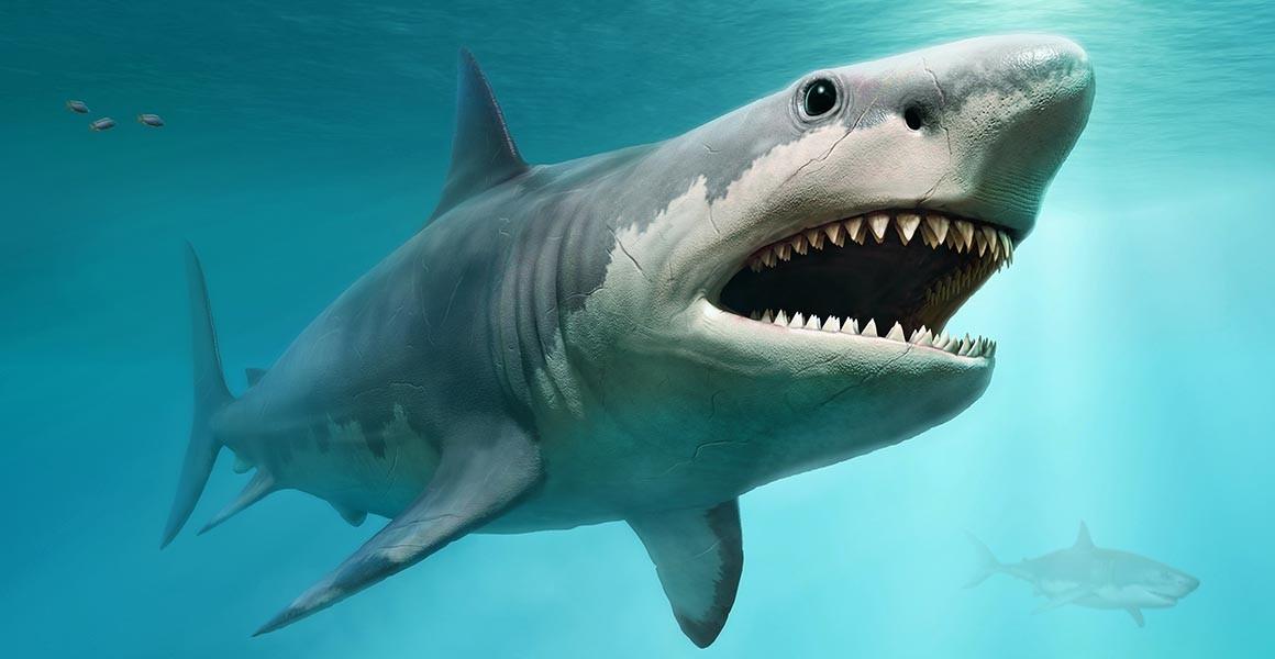 अंतरराष्ट्रीय वैज्ञानिकों की हालिया रिसर्च रिपोर्ट में शार्क और रे मछलियों के घटने की एक वजह जलवायु परिवर्तन को बताया गया है।