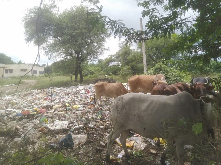 सालाना लाखों के बजट के बावजूद खुले में कचरा डाल रही पंचायत, लोगों को बीमारियां फैलने का डर उदयपुर,Udaipur - Dainik Bhaskar