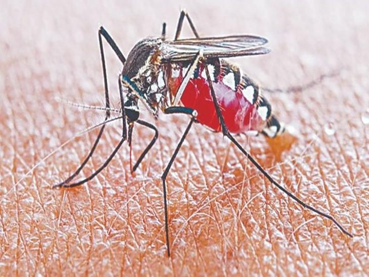मंदसौर में 46 नए मरीज, संख्या 821 पहुंची; भोपाल में वायरल फीवर से 8 साल की बच्ची की मौत, डेंगू से आगर मालवा के डॉक्टर की जान गई भोपाल,Bhopal - Dainik Bhaskar