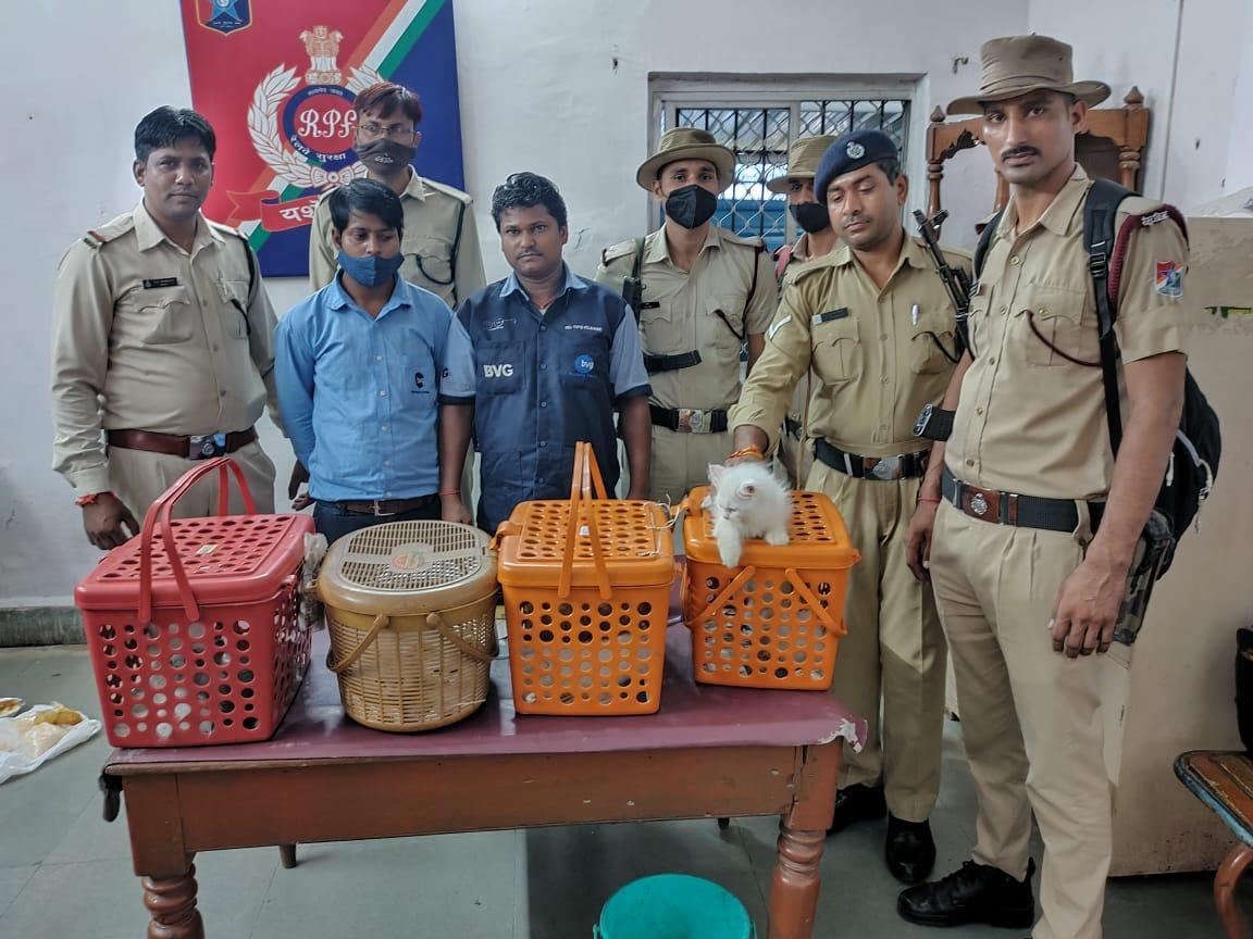 तस्करी के संदेह में RPF ने मुंबई से दिल्ली भेजी जा रहीं 8 विदेशी बिल्लियाें को पठानकोट एक्सप्रेस से उतारा, दो सफाइकर्मियों से पूछताछ|होशंगाबाद,Hoshangabad - Dainik Bhaskar