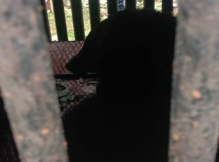 शनिवार की सुबह पलेवा गांव में लगे इस पिंजरे में एक भालू फंस गया था।