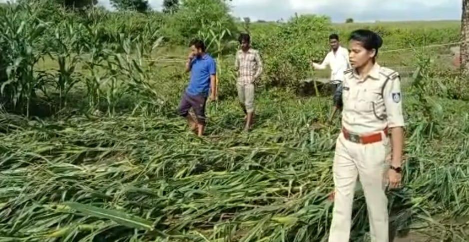 नाले से डेढ़ किलोमीटर दूर मिला ऑटो, चालक का शव ढूंढ रही पुलिस, SDRF की टीम भी कर रही सर्चिंग|छिंदवाड़ा,Chhindwara - Dainik Bhaskar