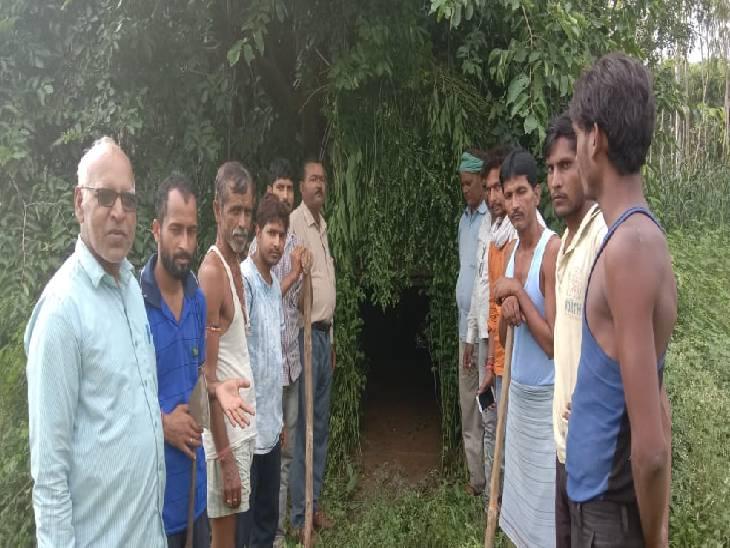 तेंदुए की तलाश जारी। - Dainik Bhaskar
