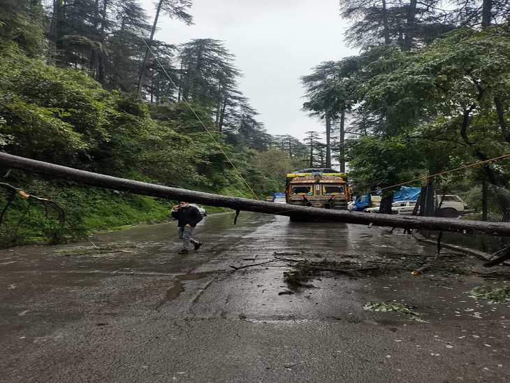खलीणी में सड़क के बीचो-बीच गिरा पेड़, जिससे यातायात बंद है।