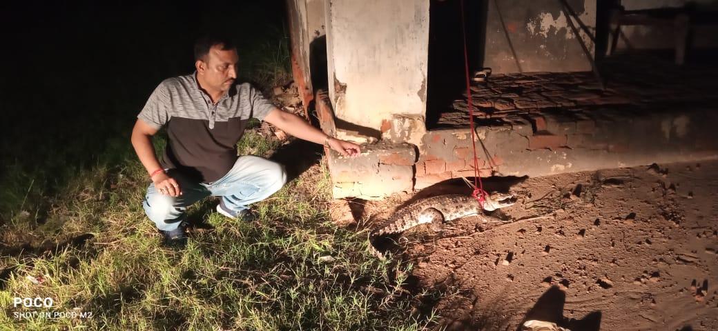 मगरमच्छ के साथ वन विभाग के कर्मचारी - Dainik Bhaskar