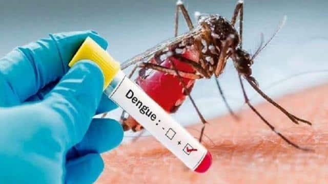 आगरा के एसएन मेडिकल कॉलेज में 18 मरीजों में डेंगू की पुष्टि, सबसे ज्यादा मथुरा के 14 मरीज, आगरा में 3 नए केस|आगरा,Agra - Dainik Bhaskar