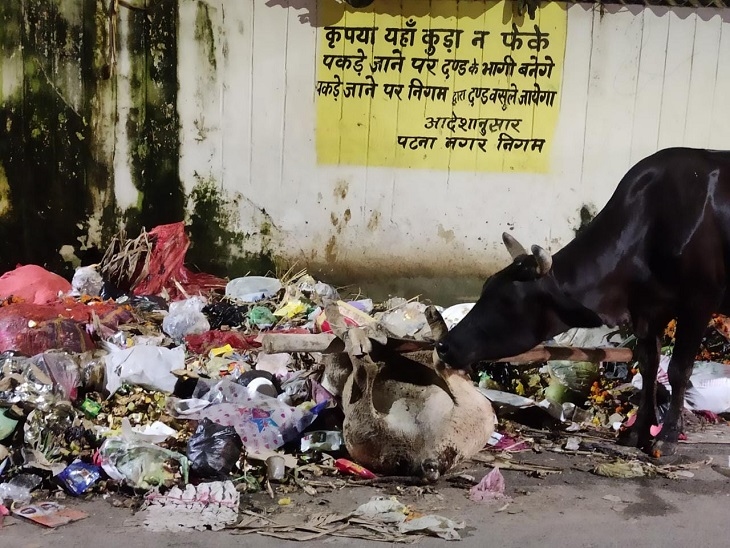 पटना में बीच सड़क मरे जानवर फेंककर बढ़ाया संक्रमण का खतरा, हड़ताल खत्म कराने के प्रयास फेल; आज फिर होगी बातचीत|बिहार,Bihar - Dainik Bhaskar