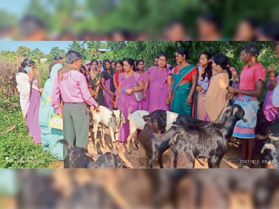 देवभोग. बकरी पालन की जानकारी लेतीं गरियाबंद की महिलाएं। - Dainik Bhaskar