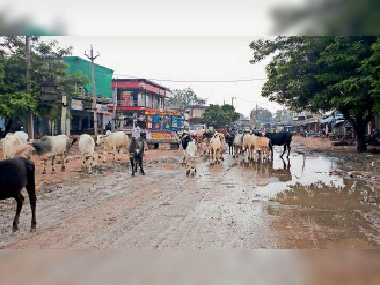 सैंपऊ.कस्बे के भरतपुर मार्ग को घेरे हुए खड़ा गोवंश। - Dainik Bhaskar