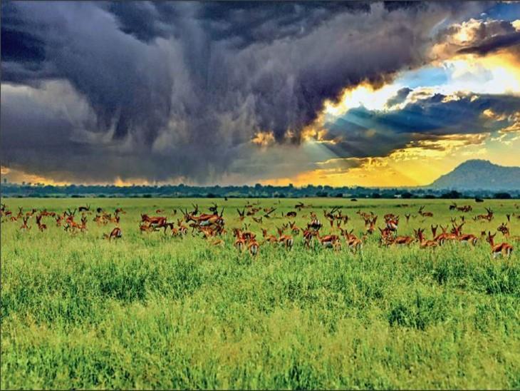 तस्वीर काले हिरणों के लिए मशहूर एशिया के सबसे बड़े तालछापर कृष्णमृग अभयारण्य की है। - Dainik Bhaskar