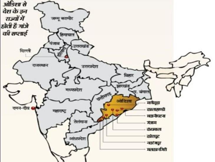 भास्कर ने पता लगाया गांजे का नेटवर्क; 300 करोड़ का काला धंधा, हर साल छत्तीसगढ़ से होकर देश के 17 राज्यों तक पहुंच रहा ओडिशा का गांजा|छत्तीसगढ़,Chhattisgarh - Dainik Bhaskar