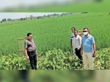 किशनगंज प्रखंड में फसल क्षति का आकलन करते एडीएम व सीओ। - Dainik Bhaskar