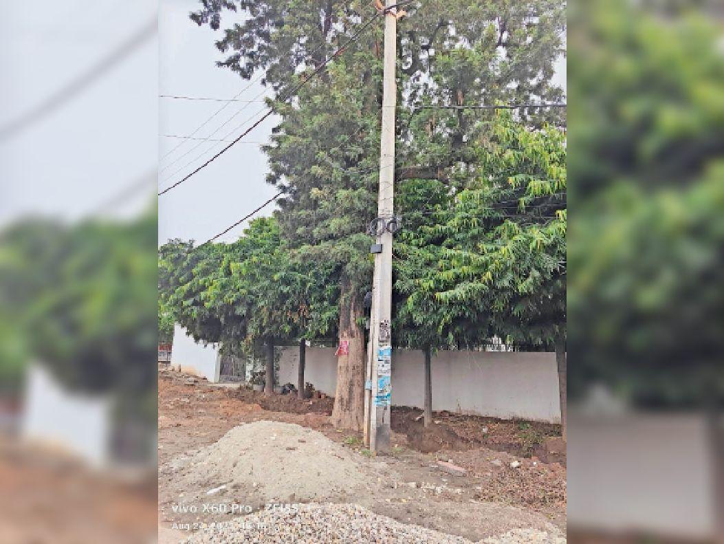 यमुनानगर  गोबिंदपुरी रोड पर पेड़, जिसे नीलाम करने का नोटिस। (ये फोटो उपलब्ध करते हुए प्रो. सैनी ने बताया कि पेड़ सीधा खड़ा है और साथ में नाले की खुदाई भी हो चुकी है।) - Dainik Bhaskar