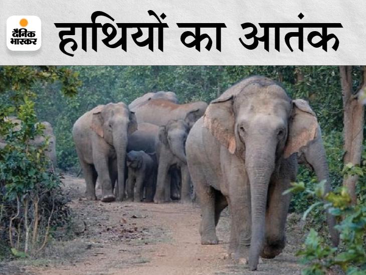 महासमुंद में बाइक सवार को उठाकर पटका, फिर आगे जाकर एक किसान को भी कुचला; महासमुंद में 3 साल में 16 लोगों को मार डाला|छत्तीसगढ़,Chhattisgarh - Dainik Bhaskar