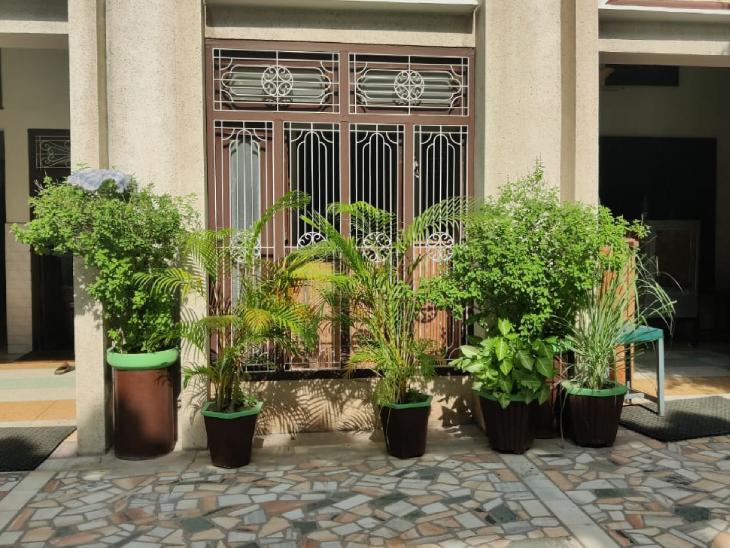 दारुल उलूम के मेहमानखाने में तुलसी के कई पौधे लगे हैं। मौलवी और यहां रहने वाले लोग इसकी पत्तियों से चाय बनाकर भी पीते हैं।