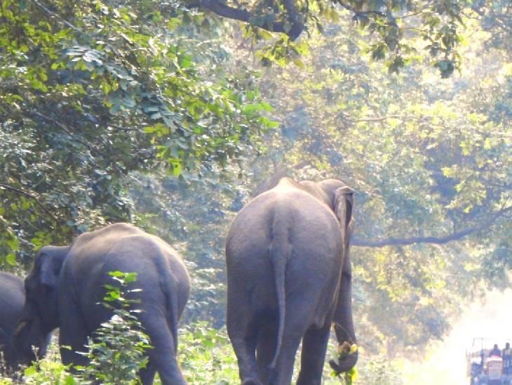 ग्रामीणों ने बताया कि इससे पहले 2019 में नेपाली हाथियों का झुंड आया था।