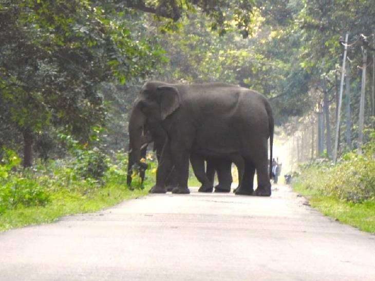 नेपाली हाथियों का झुंड धनारा घाट रोड को पार करता देखा गया। ग्रामीणों को डर है कि ये कभी भी हमला कर सकते हैं।