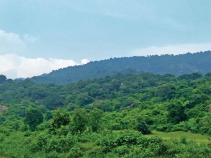 छत्तीसगढ़ गांजा तस्करी का कॉरिडोर; अभी बो रहे नशे के बीज, 5 महीने में बनेगा गांजा|छत्तीसगढ़,Chhattisgarh - Dainik Bhaskar