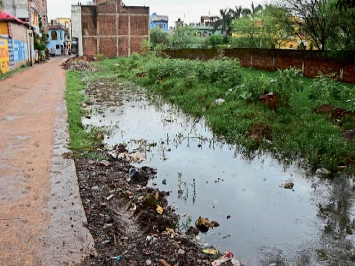 सागर| श्रीराम कालोनी में खाली पड़े प्लाॅटों में भरा बारिश का पानी। - Dainik Bhaskar