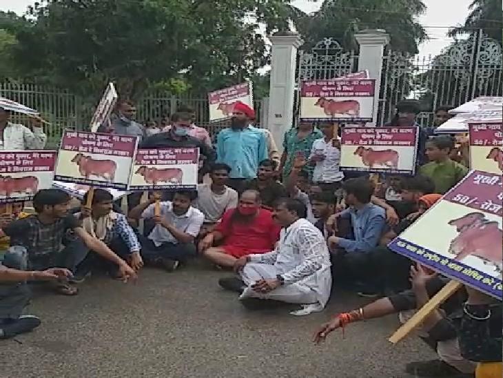 बाबा ने पैदल रैली निकालकर दिया धरना, तख्तियों पर लिखा- 'भूखी गाय करे पुकार, मेरे भरण पोषण के लिए रोज 50 रुपए दे शिवराज सरकार'|ग्वालियर,Gwalior - Dainik Bhaskar