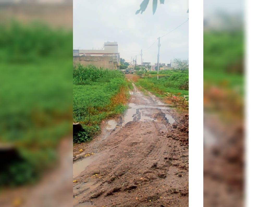 शहर के वार्ड क्र. पांच स्थित चाणक्यपुरी काॅलाेनी में नहीं बनी है सड़क। - Dainik Bhaskar