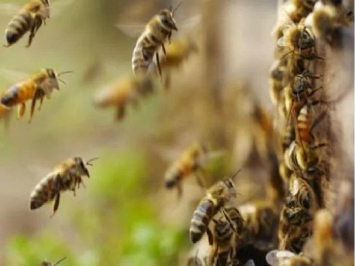 लकड़ी काटने के लिए पेड़ पर चढ़ा था, बैलेंस बिगड़ने से नीचे गिरा; मधुमक्खियों ने किया था हमला|छत्तीसगढ़,Chhattisgarh - Dainik Bhaskar